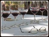 Cours d'oenologie pour entreprises, dégustations de vin