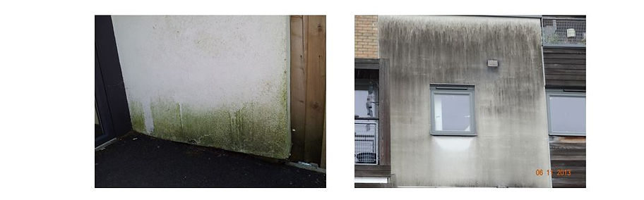 Green and Black Algae (Gloeo Capsa Magma plus other microbes) on well insulated render