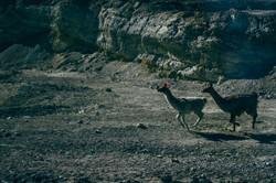 Crossing the Altiplano
