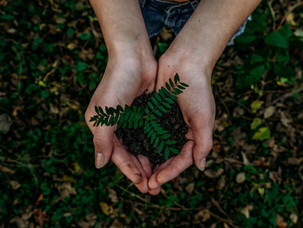 Voortleven als compost, Humusatie als opkomend alternatief voor begraven en cremeren