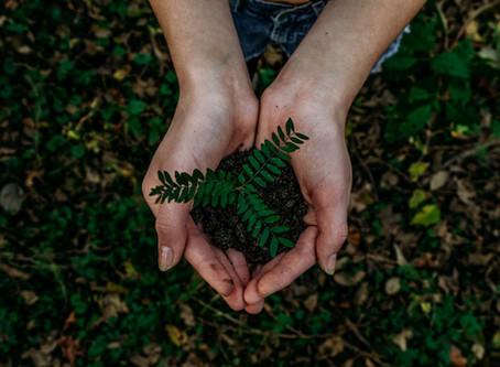 Voorteleven als compost, Humusatie als opkomend alternatief voor begraven en cremeren