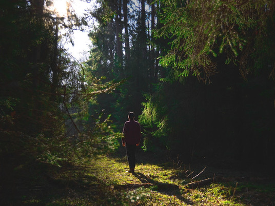 Shinrin-yoku: forest bathing