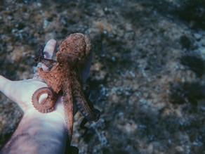 """Documentaire: Leeg je hoofd leeg en verwarm je ziel met """"My Octopus Teacher"""""""