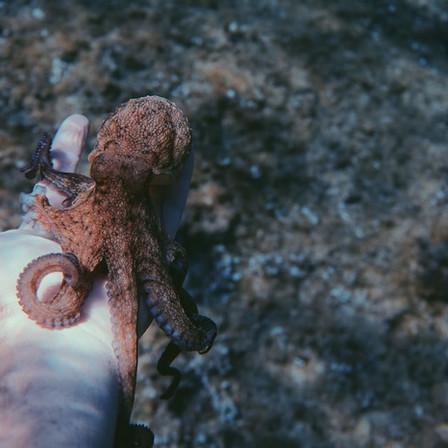 """Documentaire: Maak je hoofd leeg en verwarm je ziel met """"My Octopus Teacher"""""""