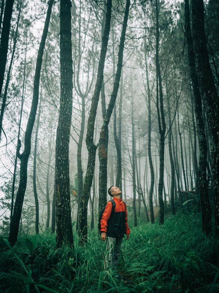 the-art-tree_forestbathing-3.jpg