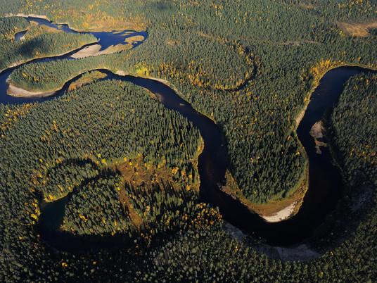 Rewilding Europe, making Europa a wilder place