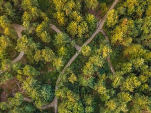 Natuurbegraven: een laatste plek in de natuur