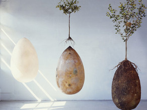 Becoming a tree: the Bios urn and Capsula Mundi change your mind