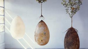 Een boom worden: de Bios urn en Capsula Mundi laten je anders denken