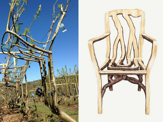 Furniture Grown by Nature