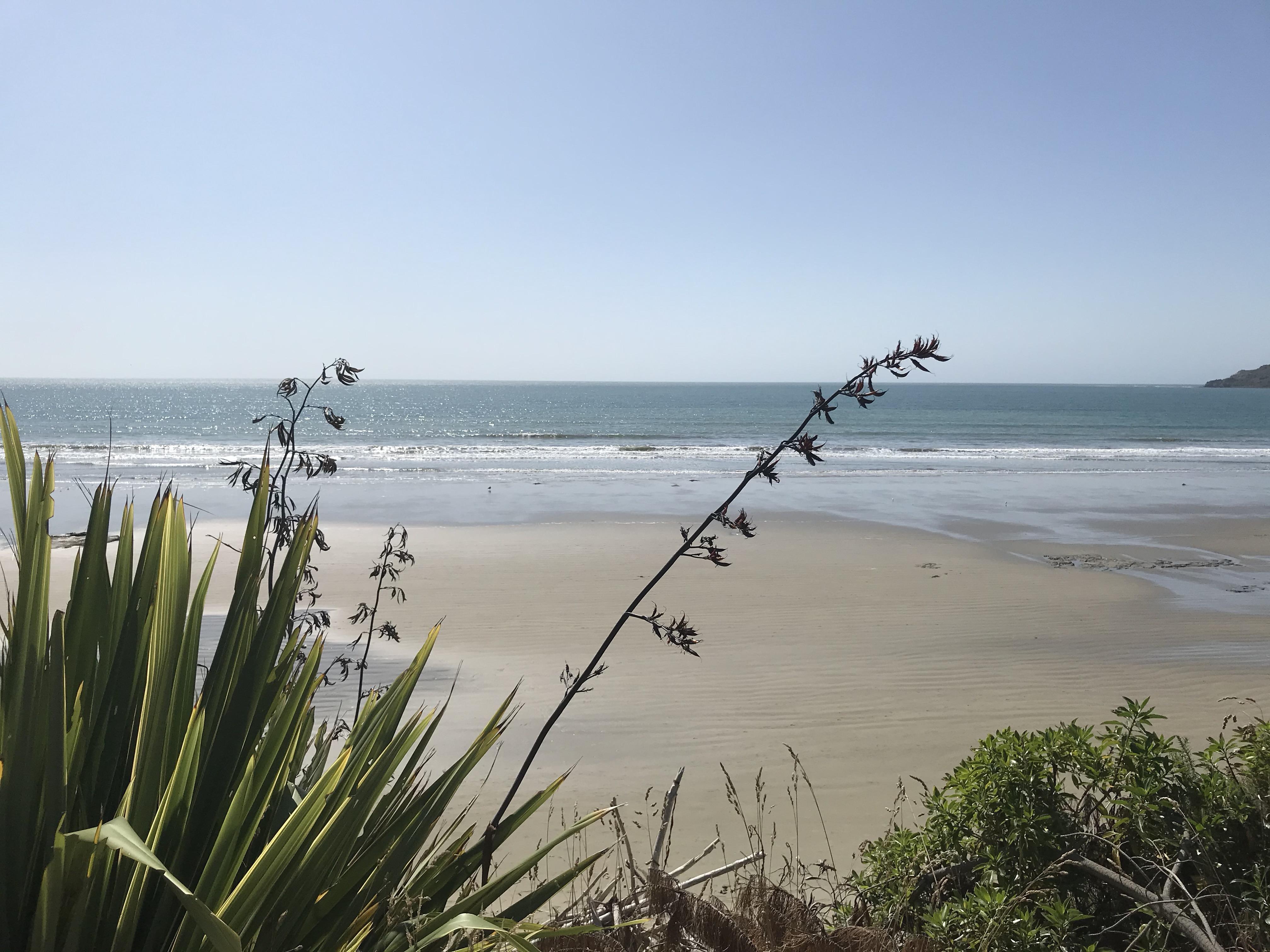 NZ coast S Island