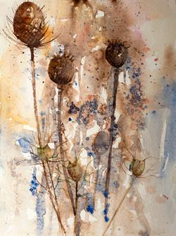 Autumn Seedheads