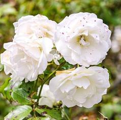 __ 73⠀_•⠀⠀⠀⠀_#whiteflower #wildlifephotography #photography #photograph #photographer #photosession #flower #flowers #flowerstagram #redflow