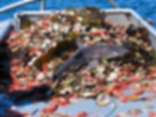Shrimp Bycatch shark.jpeg