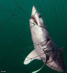 Bycatch Report
