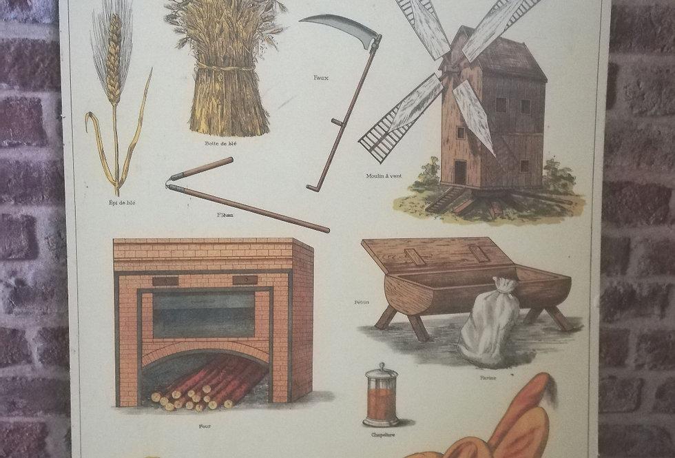 Affiche cartonnée Deyrolle sur le pain