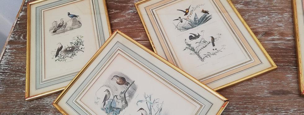 8 superbes lithographies d'après Traviès