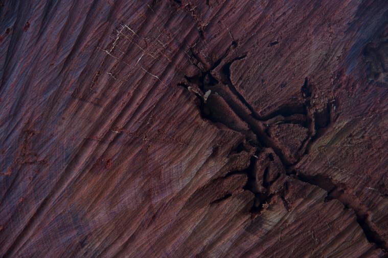 Coeur d'arbre.jpg