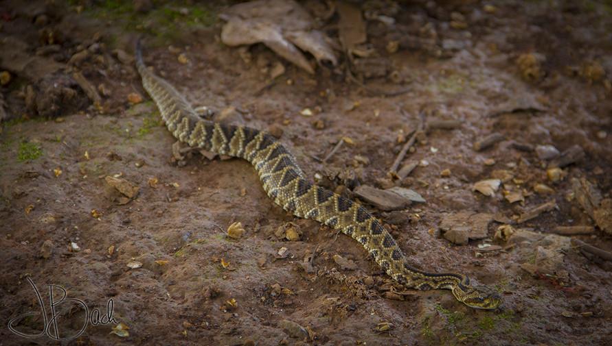 Serpent sonette.jpg