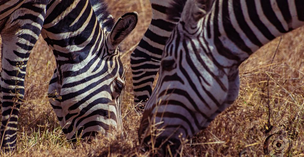 world wild jail kenya_27 copie.jpg