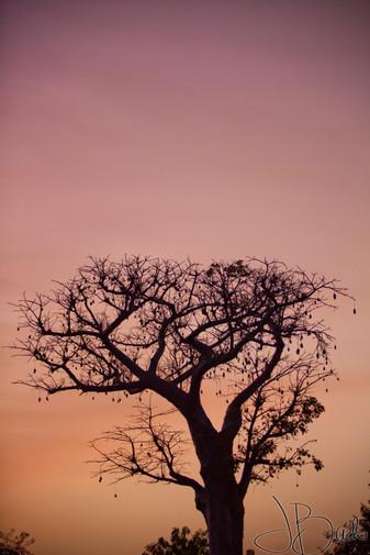 Prophète_du_Baobab.jpg