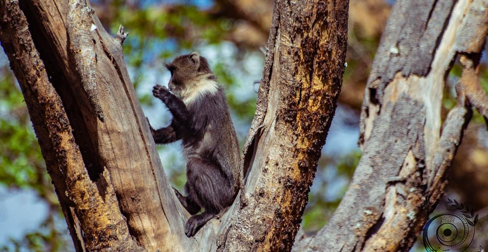 world wild jail kenya_46 copie.jpg