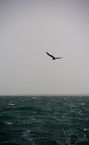 Vol au dessus du nid d'eau.jpg