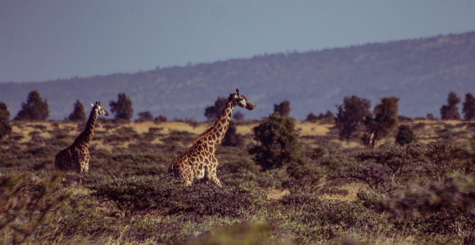 Kenya_10.jpg