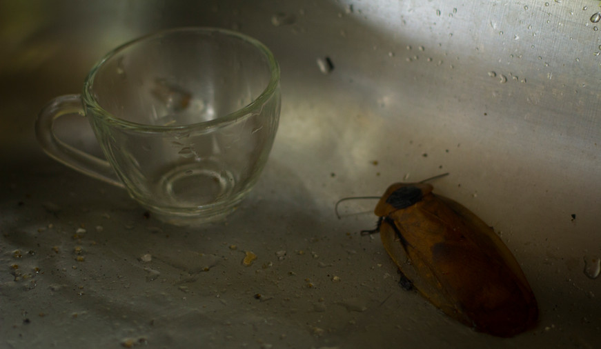 Insecte petit dej.jpg