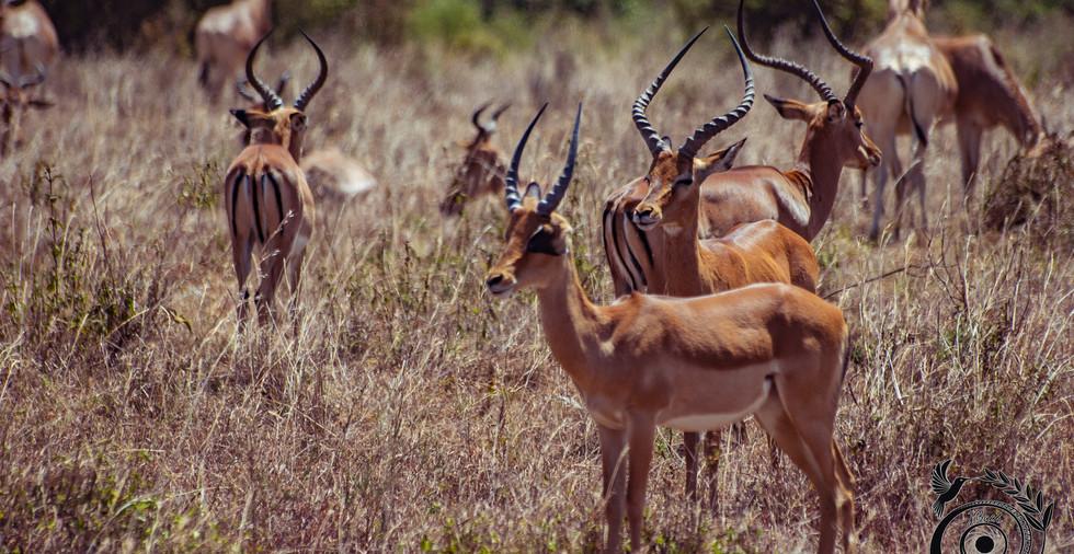 world wild jail kenya_10 copie.jpg