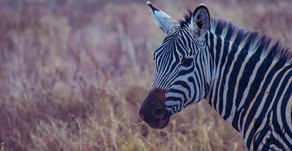 world wild jail kenya_32 copie.jpg