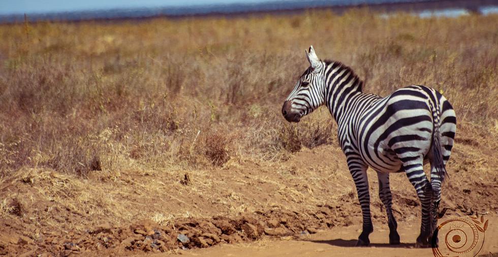 world wild jail kenya_25 copie.jpg