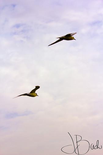 Couple d'oiseau.jpg