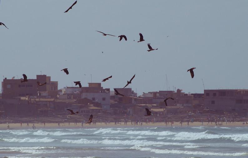 Oiseaux de Dakar.jpg