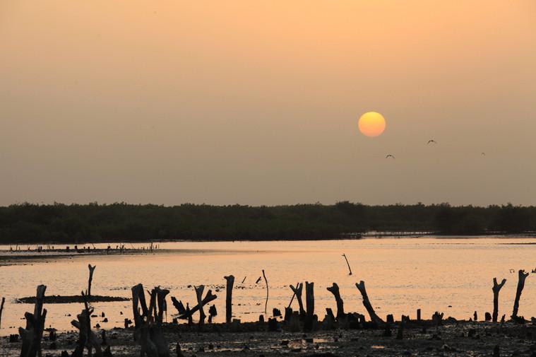 Levéesur_la_mangrove.jpg