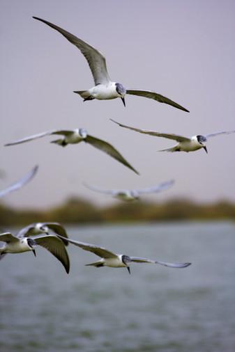 Camarade oiseau.jpg