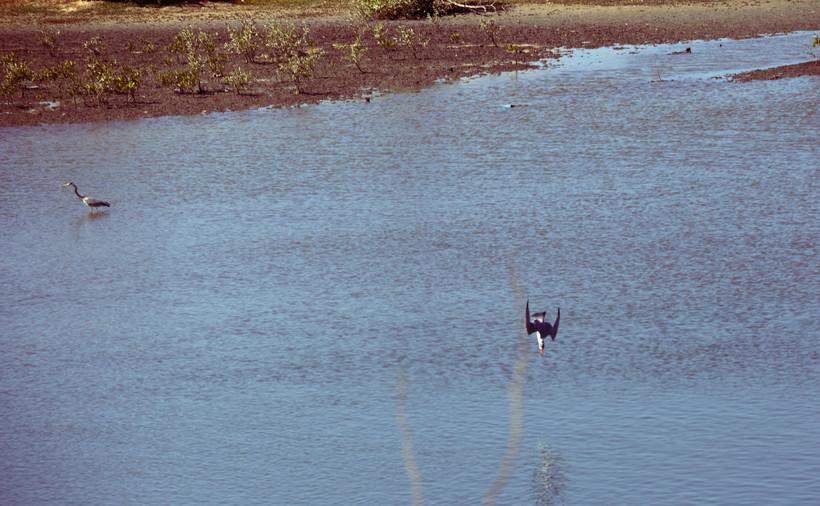 Plongeon oiseau.jpg