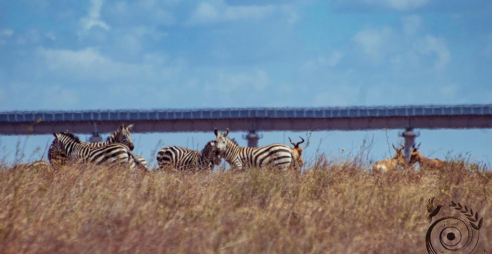 world wild jail kenya_23 copie.jpg