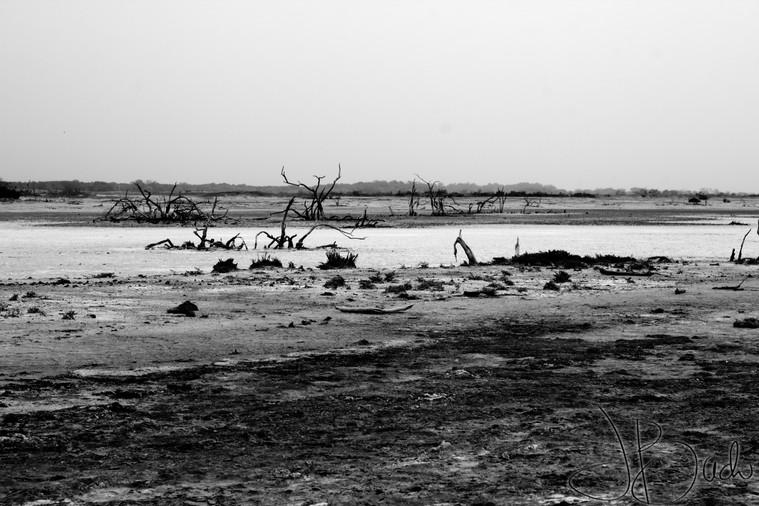 Sénégal désert.jpg