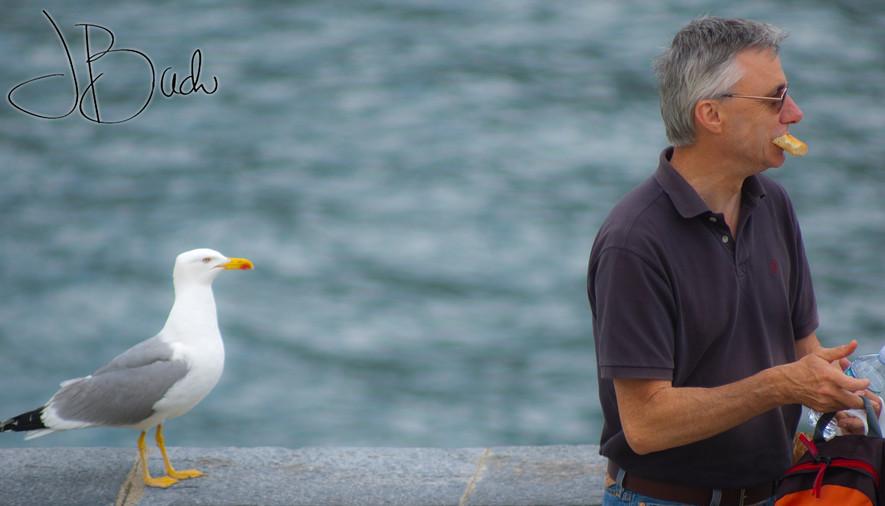 Homme Oiseau duel.jpg