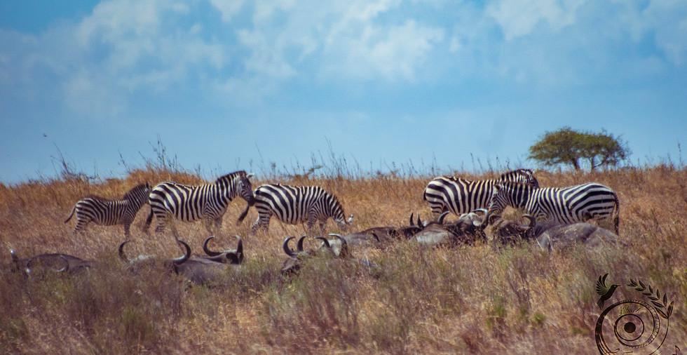 world wild jail kenya_21 copie.jpg