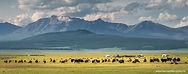 c-booming-tourism-mongolia.jpg