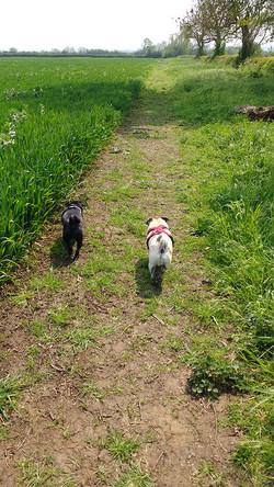 Pugs On The Road