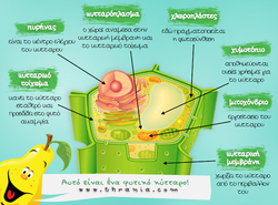 Φυτικό κύτταρο