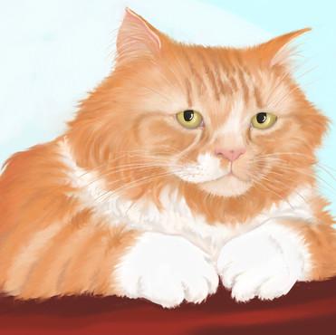 Nelson cat final new.jpg
