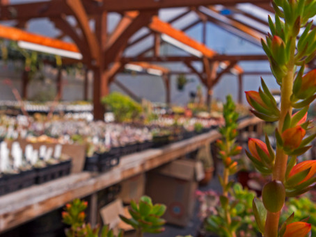 """Tacos, Beer, Succulents: A Classic """"Girl's Day"""" in the Comox Valley"""