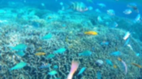 与論島 百合ヶ浜 マリンショップ『Sea Spunky(シースパンキー)』|百合ヶ浜満喫ツアー・SUP・シュノーリング・スキンダイビング