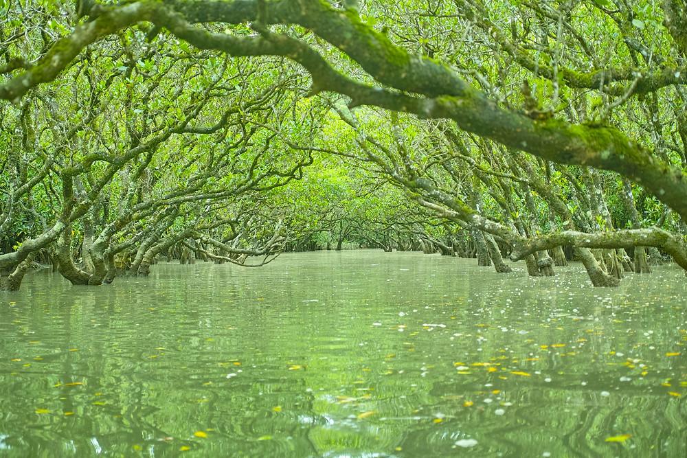 いつもと違った角度から見る奄美の世界『黒潮の森マングローブパーク』