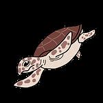 アカウミガメ.png