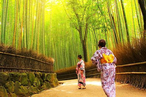 tour guide | Arashiyama Bamboo Forest